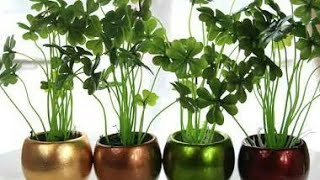 Indoor Plants That Gives Off Oxygen at Night as Well..