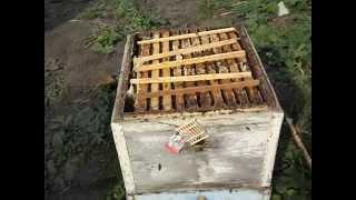 утолщенные соты под мед ( обновление 22 августа 2014 года )