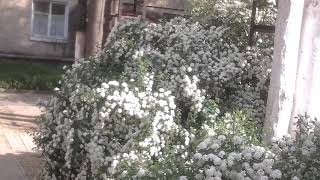 Цветы-невеста в Дубоссары