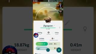 Pokemon Go - Gen 3 - Zigzagoon