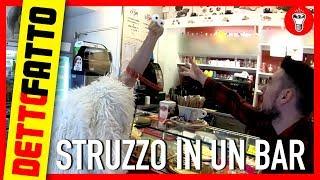 Entrare in un Bar con uno Struzzo al Guinzaglio - DETTO FATTO EP.10 - DE GUSTIBUS EDITION