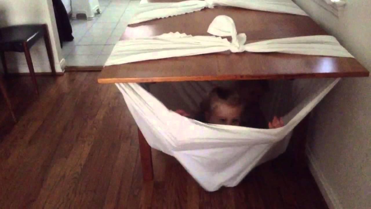 table hammock table hammock   youtube  rh   youtube