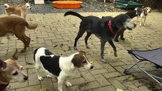 Outside Dog Yard Cam 09-22-2018 11:30:27 - 12:30:28