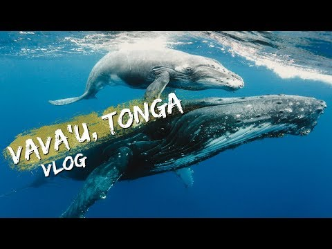 TRAVEL VLOG | TONGA, VAVA'U