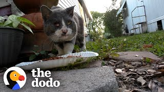 Stray Cat Goes From Street Puddles To Sweet Cuddles With His New Brother   The Dodo Cat Crazy