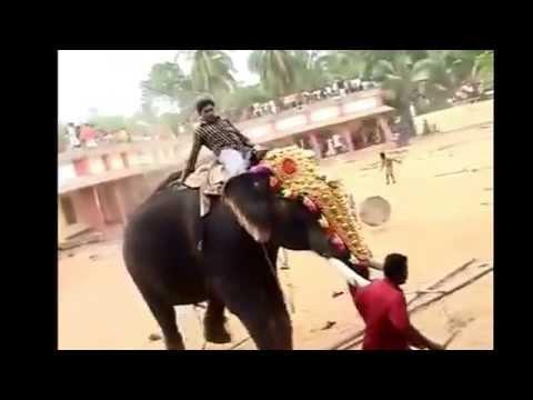 Agresief elephant killed  a man in india