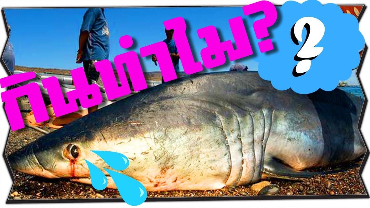 กินหูฉลามแล้วได้อะไร? | ลาบสมอง