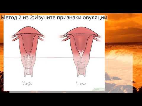 Как определить положение шейки матки