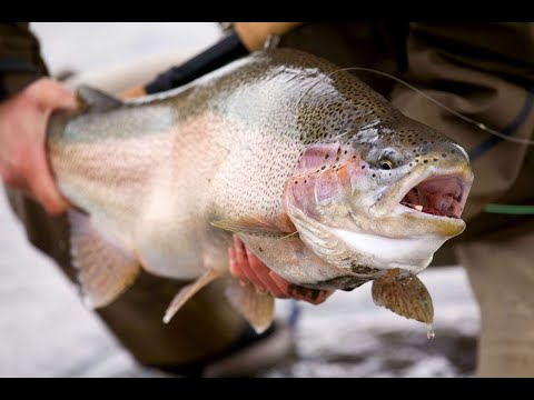 Pantybedw Trout Fishery, Wales - Winter Stillwater Fly Fishing Tips & Tactics