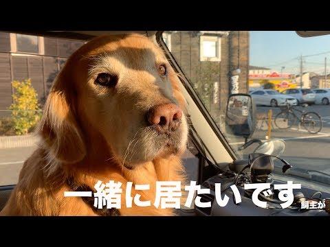 力をくれる愛犬