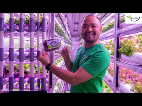 When Containers Are Turned into Hydroponic Vertical Farms