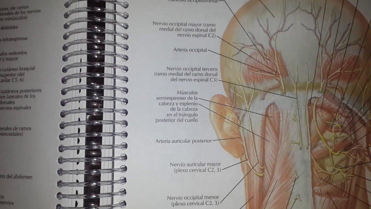 Netter Anatomía 6ed De Bolsillo A5 Color Anillado - YouTube