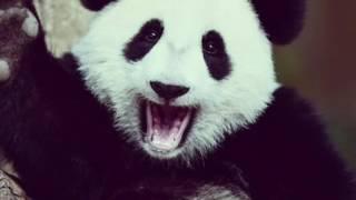 Очень милый клип про животных,посмотрите не пожелеете!!!!!