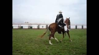 Маринера. Национальный танец Перу. Лошади.