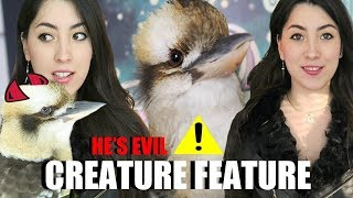 LOUDEST Bird Ever! | Laughing Kookaburra | Creature Feature (Includes Feeding)