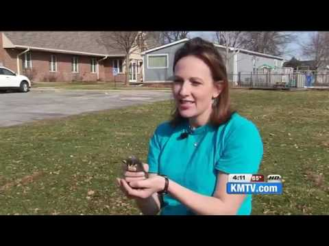 25469 tiere KMTV Omaha farm rents chicks for Easter