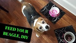 How To: Feed Your Beagle Dog, DIY