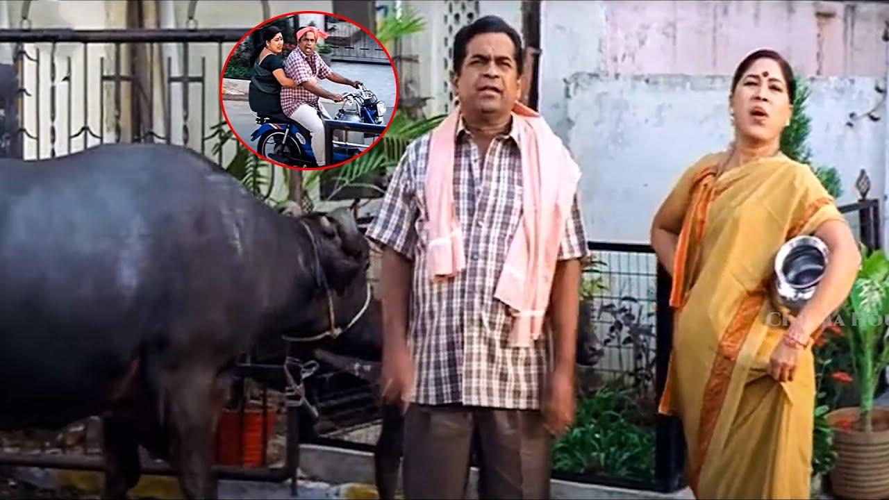 Download Brahmanandam & Kovai Sarala Milk Comedy Scene | Sunil Comedy | Cinema House