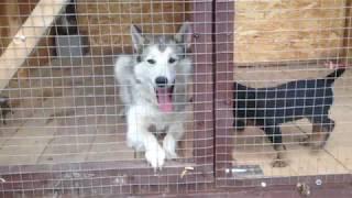 Мои охотничьи собаки!!!