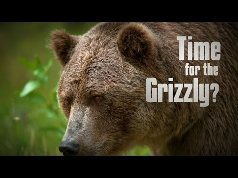 Time for the Grizzly?