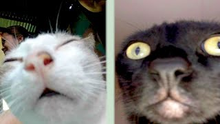 BEST CAT MEMES COMPILATION OF 2020 PART 36 (FUNNY CATS)
