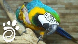 Помогаем Попугаю Поменять Оперение.. Все О Домашних Животных
