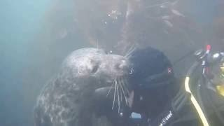 Playful Seal Part 3 - DiveMania Scuba