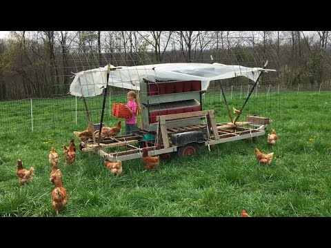 100 Laying Hens on Pasture with Rollout Nest Boxes