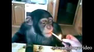 Прикольные видео про животных