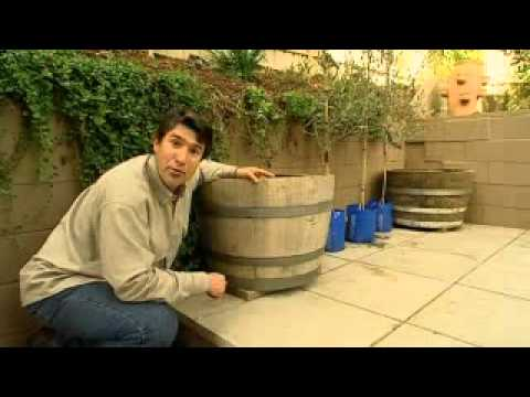 The Garden Gurus Planting Up Wine Barrels Youtube