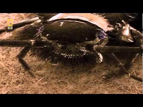 Клопы и их братья Bug Brother