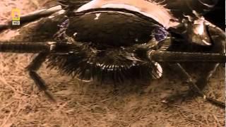 Клопы и их братья - Bug Brother