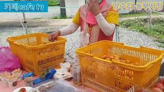 장마도 비켜주는 양수리 농부시장, 양수리 파머마켓