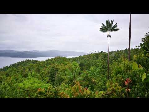 🎧 Sounds Of The Jungle - Paradise Birds Of Raja Ampat - West Papua, Indonesia