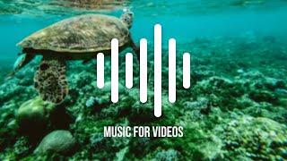 Best Reggae Music for Videos | Savannah Sunshine