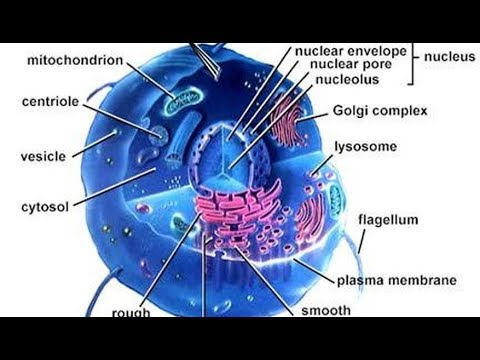 Cell And Cellular Organization In Kannada Class 7 Youtube