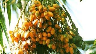 Download lagu അടക ക പ റ ക ക ന ന എന ത രൻ I Arecanut tree Climbing Machine MP3