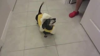 what happens when you give too much banana to your dog