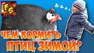 ВЛОГ Как Егор кормил птиц зимой? Видео для детей.(Мы знаем чем кормить птиц зимой, а вы знаете? Давайте вместе посмотрим. У нас в городе есть большой парк,..., 2016-12-07T10:56:29.000Z)
