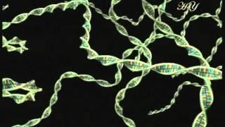 Чудо строения клетки