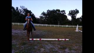 Gaited Horse Side Passing  Sidepassing Tennessee Walking Horse, Sunny