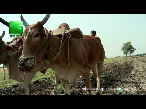 Conference On Organic Farming in Business Of Agriculture On Green TV