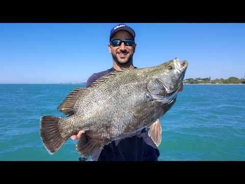 INSANE TRIPLE TAIL FISHING PLUS A BONUS COBIA & SNOOK!!!
