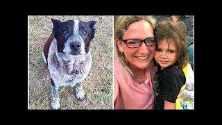 Старый пес спас маленькую девочку, которая заблудилась в лесу