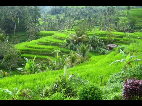 Bali, a wonderful Island