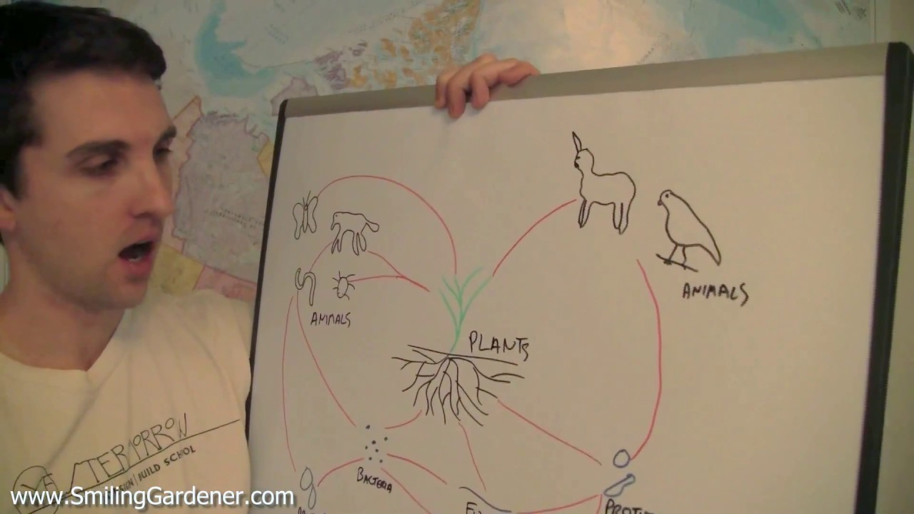Soil food web drawing youtube for Easy drawing websites