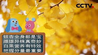 [智慧树]道哥和摩尔:银杏树|CCTV少儿