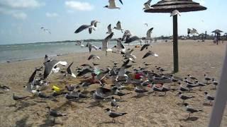 Video birds attack buried girl download MP3, 3GP, MP4, WEBM, AVI, FLV November 2017