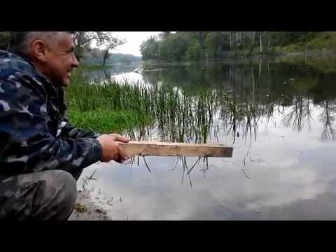какая рыба сейчас клюет и на что видео