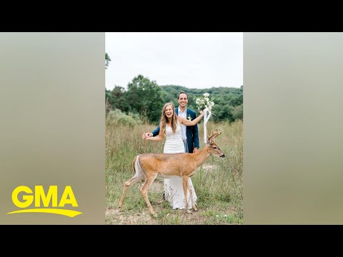 Tanner and Drew - Deer Adorably Photobombs Wedding Pictures